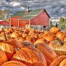 Pumpkin Season by ECH52