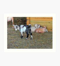 Baby Goats Art Print