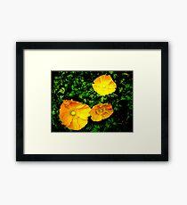 Popular Poppies Framed Print