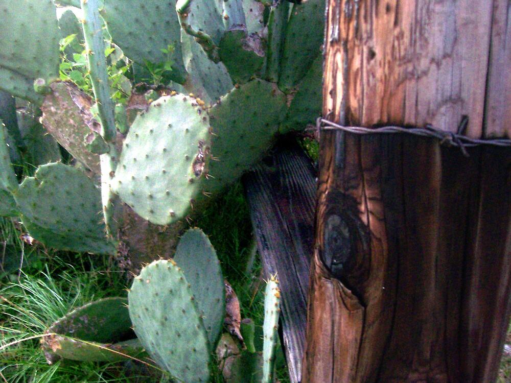 Prickly Post by Dan McKenzie