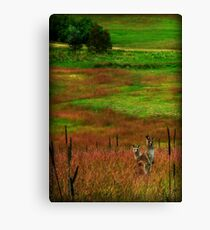 curious and ready to hop Canvas Print