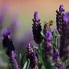 Lavender Spring by Michelle Dewis