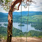 Arbutus Tree Swing by Tracy Riddell