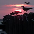 Seagull Sunset by Lolabud