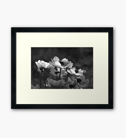 Poppies in Black and White Framed Print