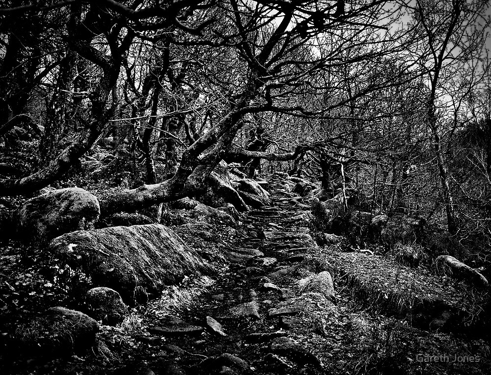 Dark Path by Gareth Jones