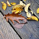 Leaves on a bridge by Marie Martelli