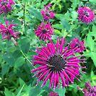 Deep Purple Flowers by silverdragon