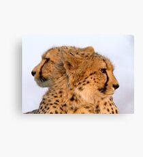 Two Headed Cheetah? Canvas Print