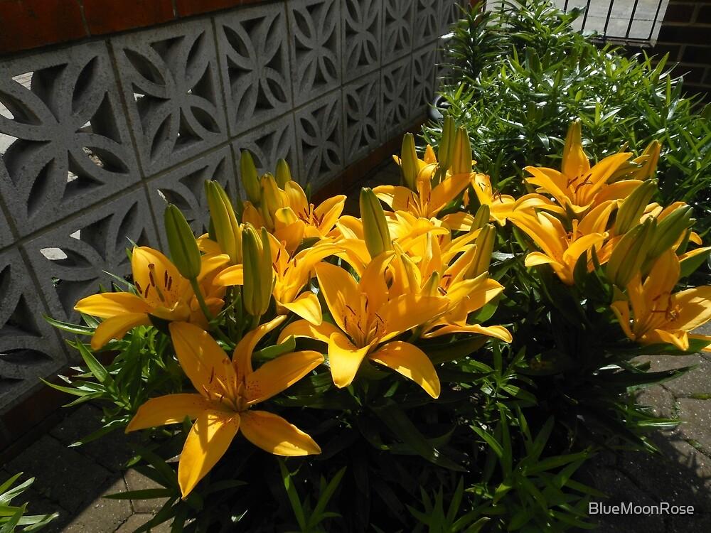 Anstreben Gold - Sunkissed gelbe Lilien von BlueMoonRose