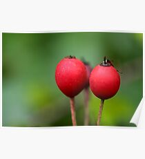 Berry Berry Red Poster