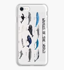 Whales Of The World Chart iPhone Case/Skin