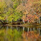 Fall At Eels Creek - 2010 by Tracy Wazny