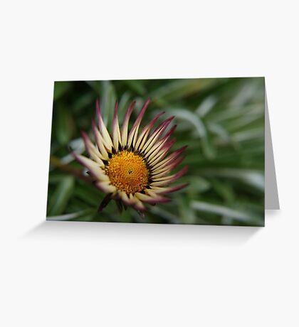 Roadside Daisy Greeting Card