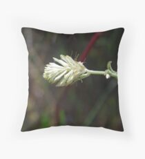 Ptilotus - long tails Throw Pillow