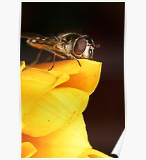 Hoverfly on yellow flower II Poster