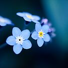 Feelin' Blue by Josie Eldred