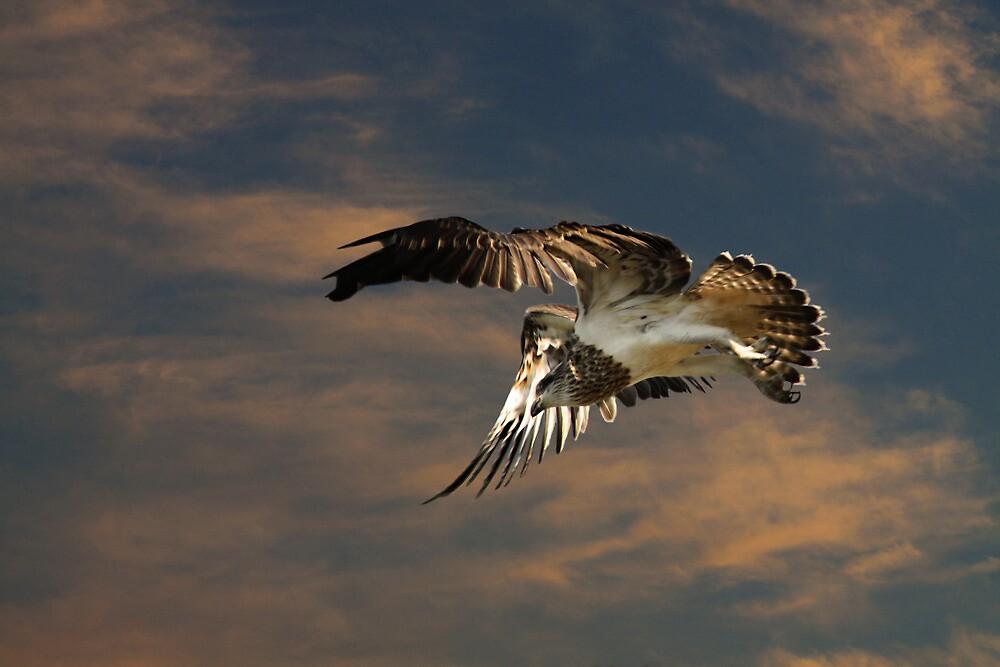 Letting Go of the Nest by byronbackyard