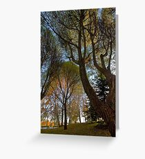 Seats under the big trees Greeting Card