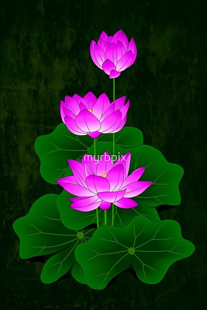 Pink Lotus by myrbpix