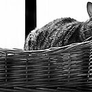 Heaven is a cat Basket  by greigsy