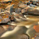 Golden Autumn Stream by Gregory Ballos
