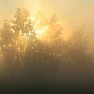 Misty morning by Andrey Kudinov