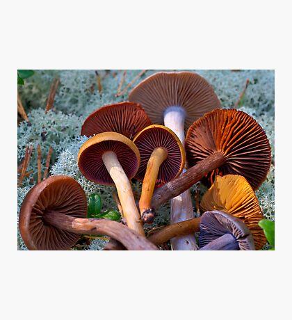Colourful Genus Cortinarius Photographic Print