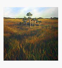 Ten Palms Photographic Print