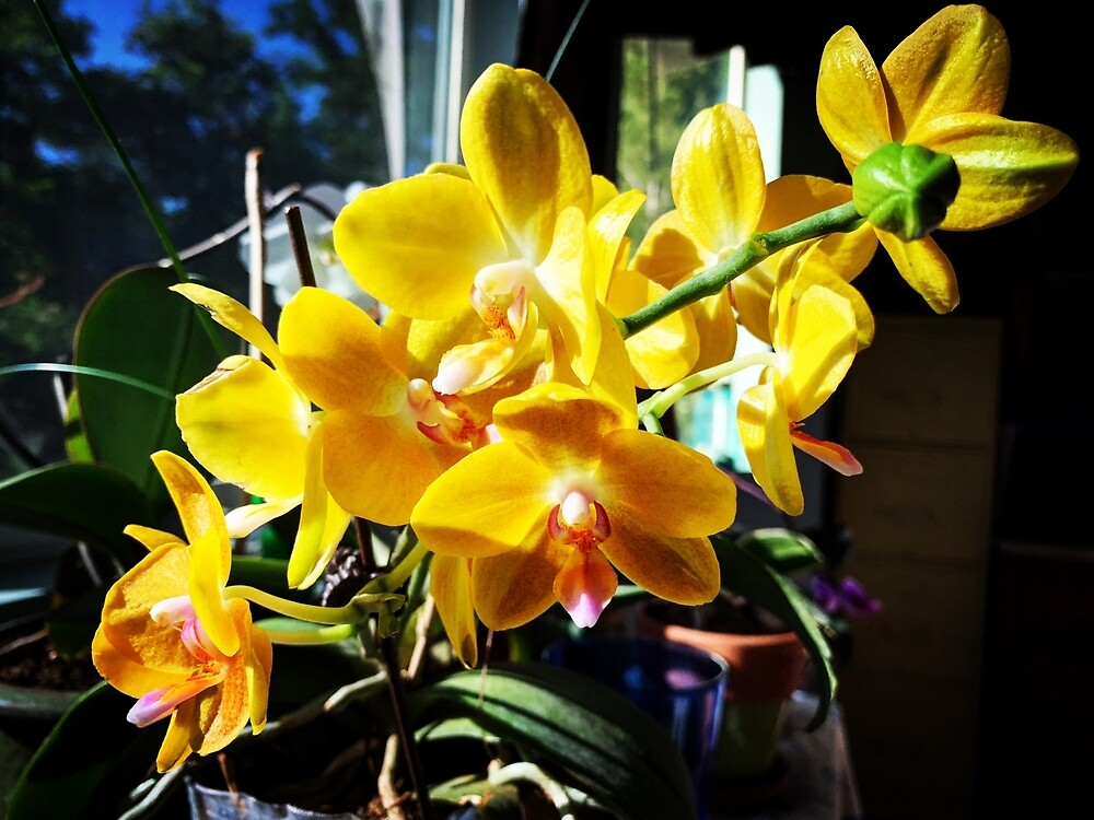 Yellow Orchids In The Sun by Douglas E.  Welch