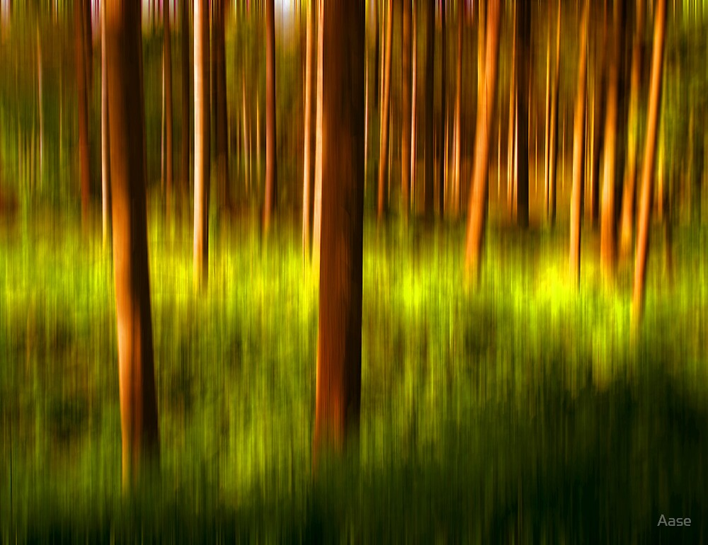 Trees in colors by Aase