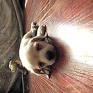 Marshmallow his name by saseoche