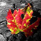 Fallen Leaf by ZombieEnnui