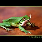Green Frog eating Gecko,FNQ. by Susan Kelly