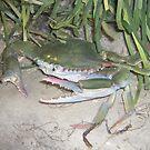 blue crab  by Sheila McCrea