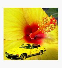Pretty in Yellow.......... Photographic Print