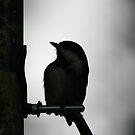 tiny bird by pallyduck