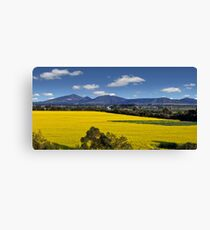 Canola Fields -  Lara, Geelong  Canvas Print