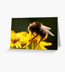 Bee-n a Great Summer! Greeting Card