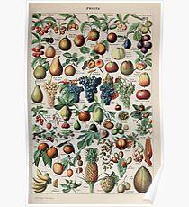 Adolphe Millot fruits pour tous Poster