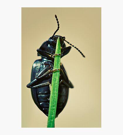 Hidden Beetle Photographic Print