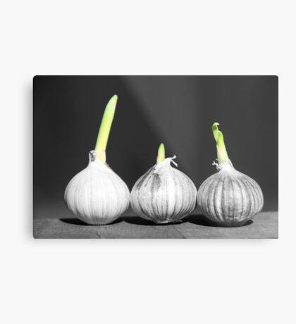 Shallot Sprouting Metal Print