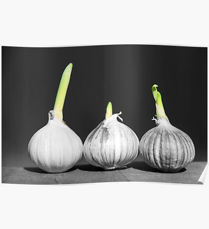 Shallot Sprouting Poster