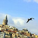 seagul over istanbul by yuca