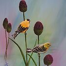 Goldfinch in the Allium by southshoreart