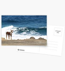 Neglected dog, Lanzarote Postcards