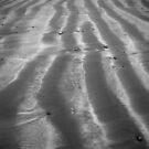 sand stripes by Mitch  McFarlane