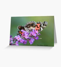 American Lady Butterfly Peek A Boo Greeting Card