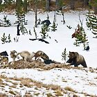Grizzly Attack! by Michael S Nolan