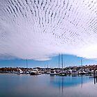 Holy Mackerel! - Cleveland Qld Australia by Beth  Wode